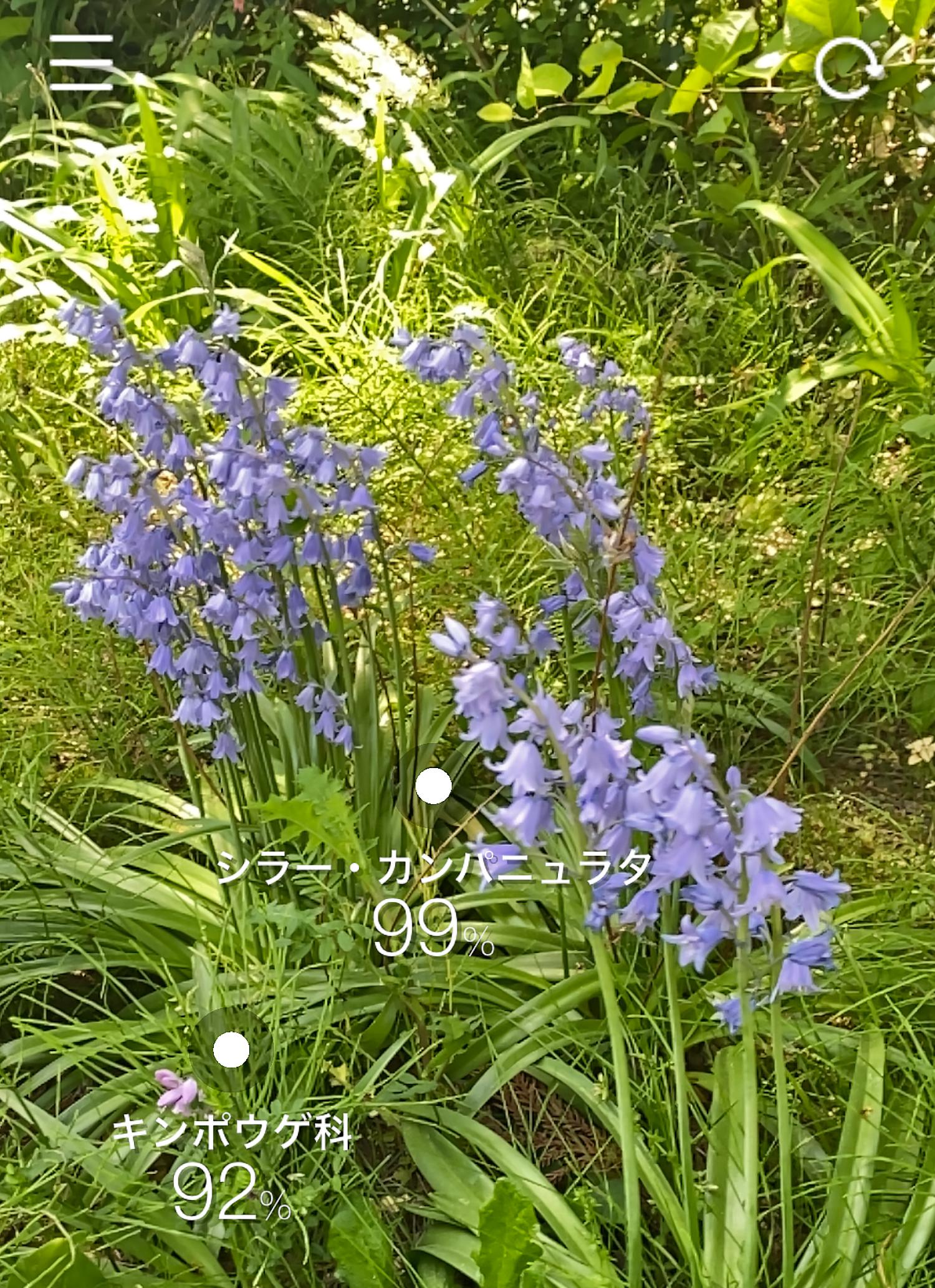 画面内の複数の花の種類も判定可能